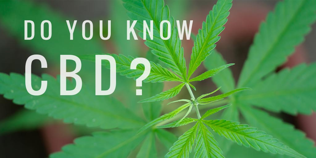 Know CBD? What You Should Consider When Purchasing a CBD Product