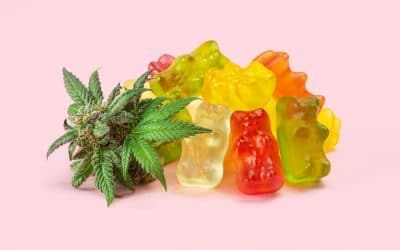 What to Look for in CBD Gummies